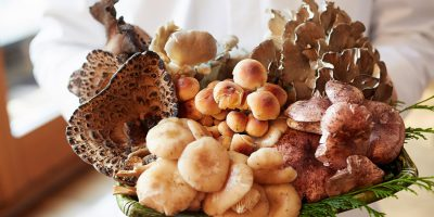 właściwości pielęgnacyjne grzybów